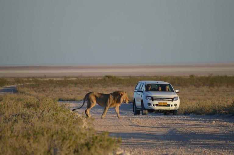 lion-2011579_1920